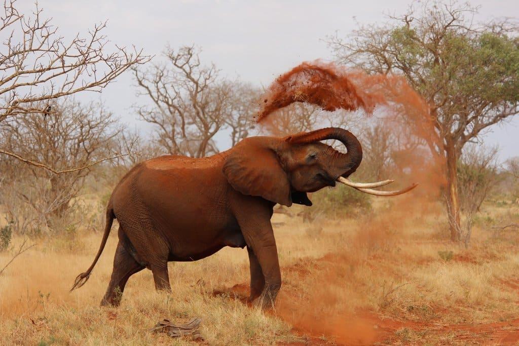 zuid afrika olifant