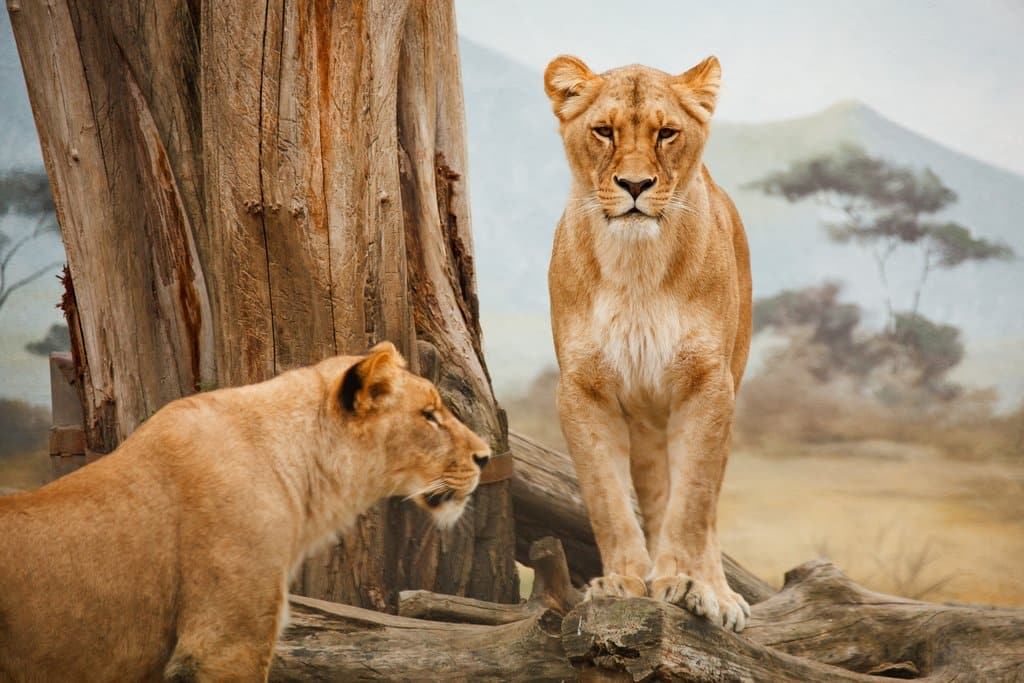 zuid afrika safari