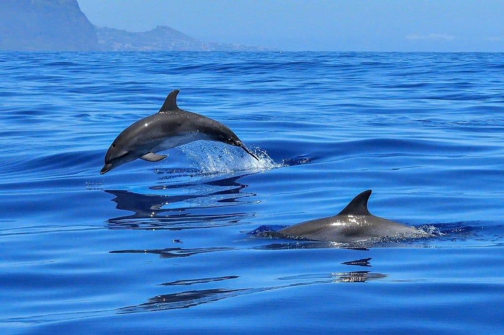 zwemmen met dolfijnen in lovina