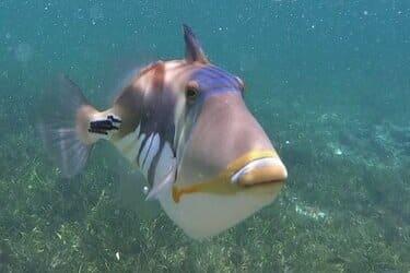 snorkelplekken bali