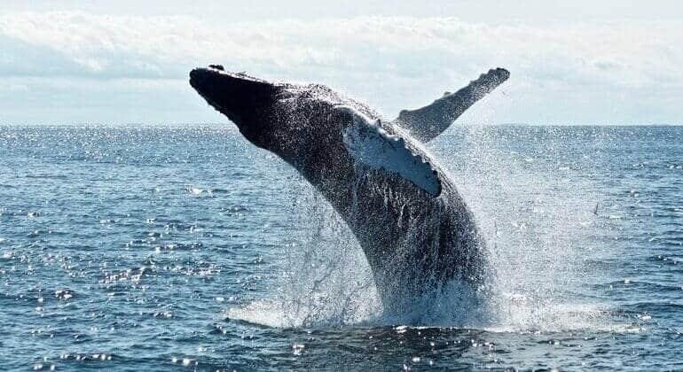 Kaikoura, Nieuw Zeeland | Tips + 15 leuke dingen om te doen