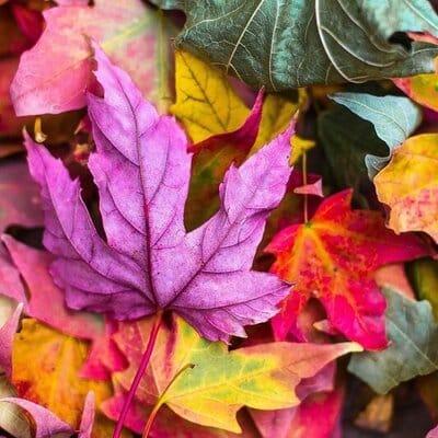 dagje uit herfst