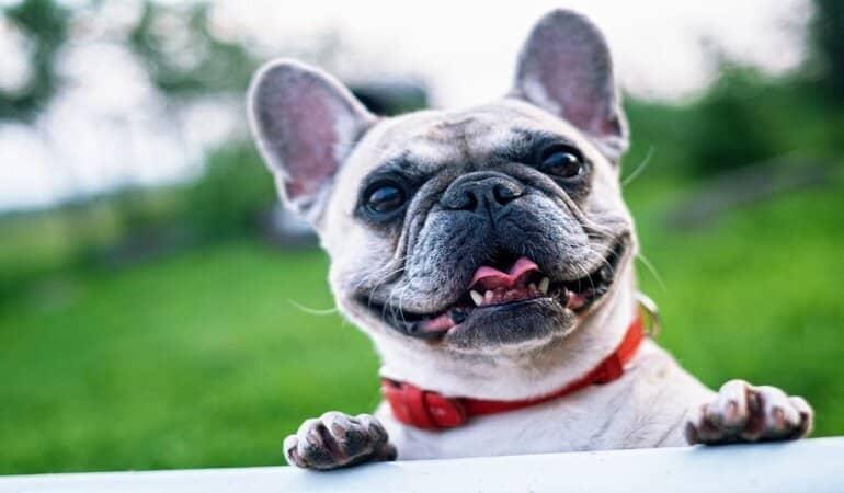 Camper huren met hond? 5 handige tips + camperverhuurders