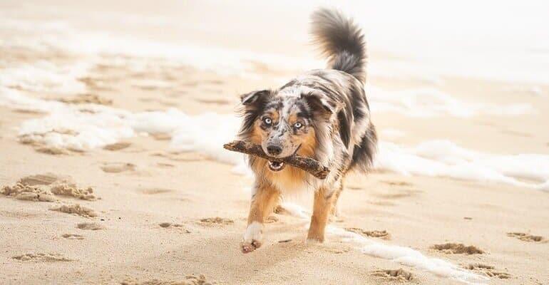 huisje aan zee met hond zeeland
