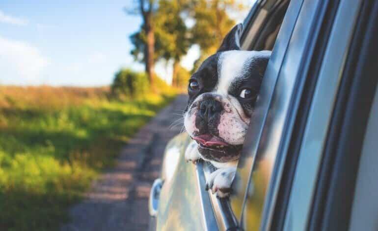 op vakantie met hond in de auto