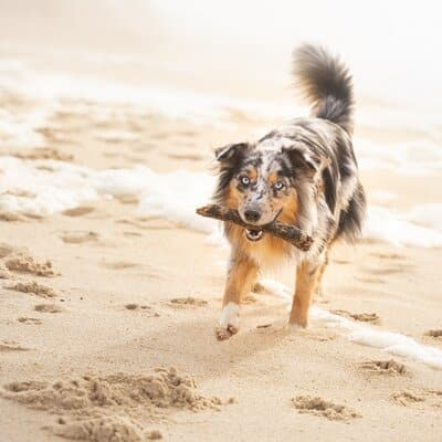 overnachten met hond aan zee in zeeland