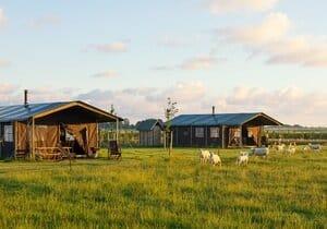 boerencamping ameland
