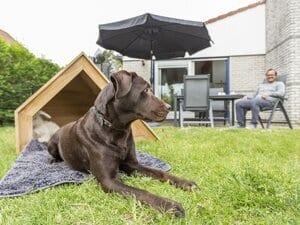 vakantiehuis met omheinde tuin voor honden noord holland
