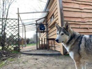 wellness huisje met hond limburg