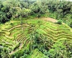 excursies rijstvelden bali