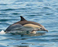 gibaltar dolfijnen spotten