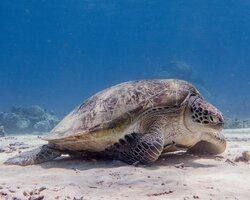 gili air scuba diving