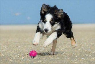 last minute texel hond