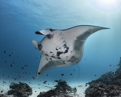 snorkel avontuur nusa penida